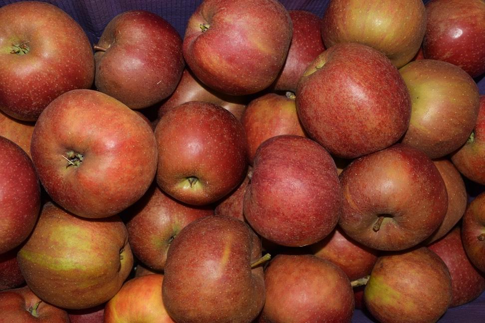Apfel-Boskoop