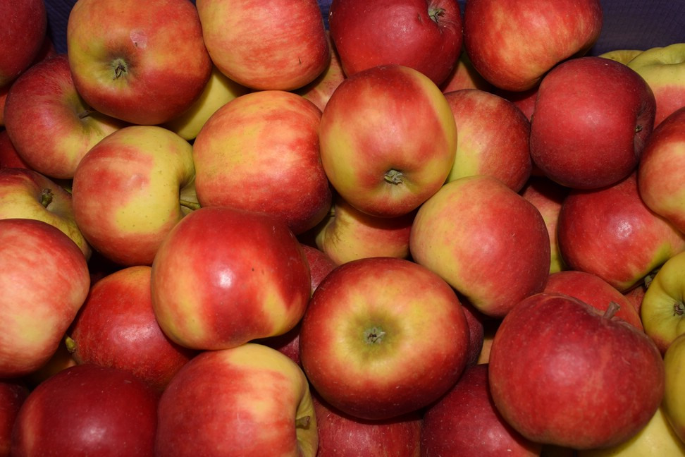 Apfel-Elstar
